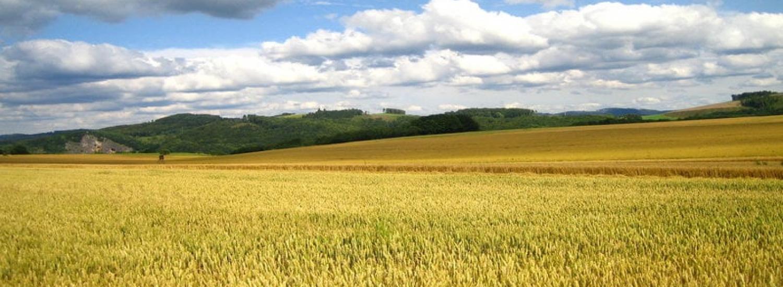 Аграрії, бізнес та влада обговорили питання участі громад у реалізації державної політики у сфері земельних відносин на Луганщині
