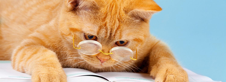 Коли кішки - головні в будинку (ФОТО)