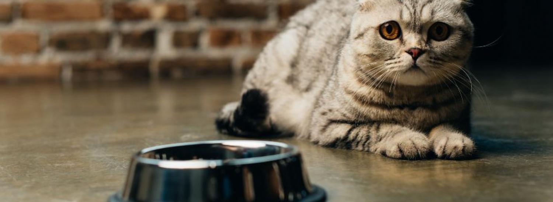 Мережу насмішила відчайдушна спроба кота вкрасти картоплю з холодильника (ВІДЕО)