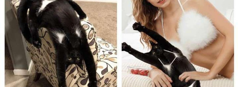 Кіт зі смішними пахвами став героєм мемів