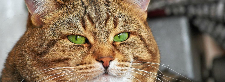 Пухлий кіт зі здивованою мордою підкорив мережу (ФОТО)