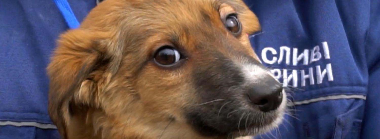 У Маріуполі відкриють лабораторію для стерилізації безпритульних тварин