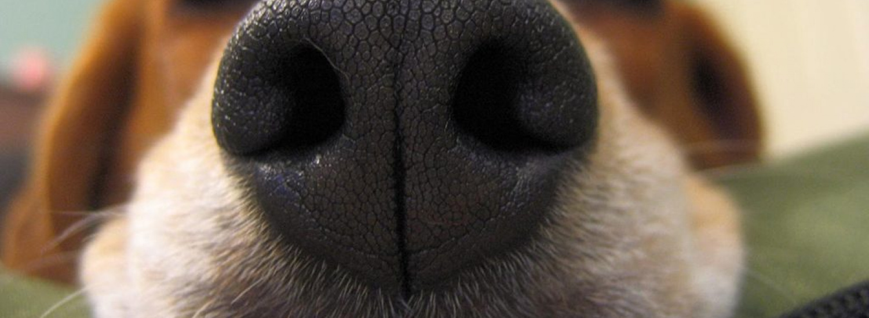 Цікаві собачі носи, які не пропустять жодної події (ФОТО)