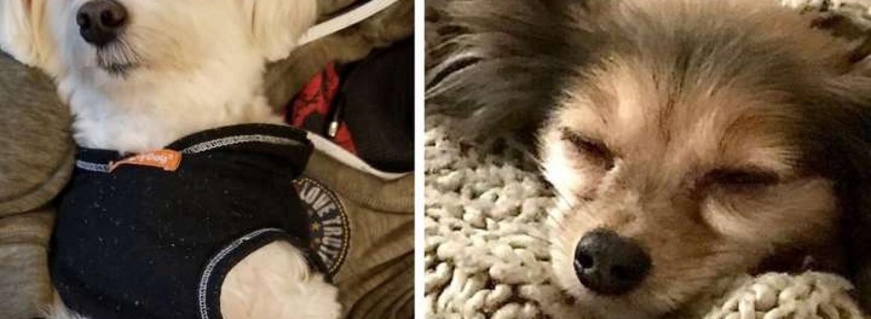 Курйозні фото домашніх улюбленців, які ну дуже люблять поспати