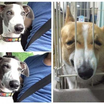 Коли собаки зрозуміли, що їх ведуть до ветеринара, а не в парк: курйозні фото
