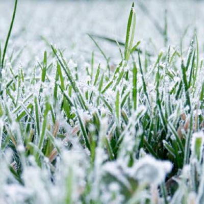 Курйоз дня: у Києві комунальники вирішили постригти газон під снігом