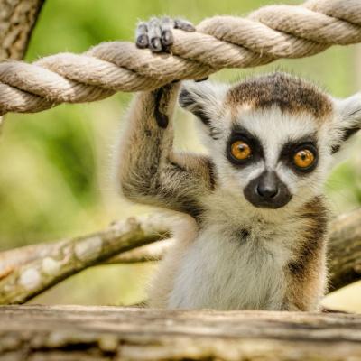 Курйозні знімки тварин, яким фотогенічність дана від природи (ФОТО)