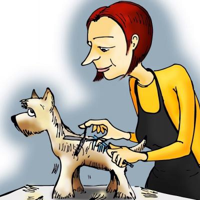 Салон грумінг перетворив собаку на альпаку