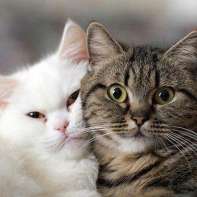 Кіт запізнився на вечерю і отримав наганяй від кішки (ВІДЕО)