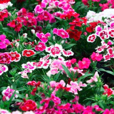У м. Рубіжне, що на Луганщині, вандали вкотре пошкодили клумби з квітами