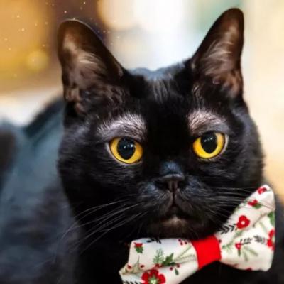 Кіт з людськими бровами підкорив понад 6,5 тисяч фоловерів