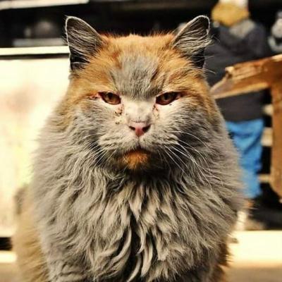 Кіт нечупара ледь не знепритомнів від свого запаху