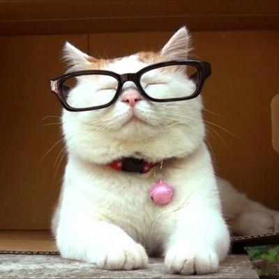 У США в якості виборця зареєстрували кота