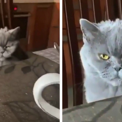 Похмурий заспаний кіт став зіркою соцмереж (ВІДЕО)