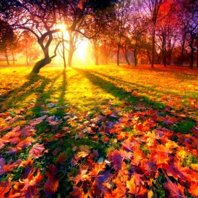 Желтый лист опавший обранила осень ...