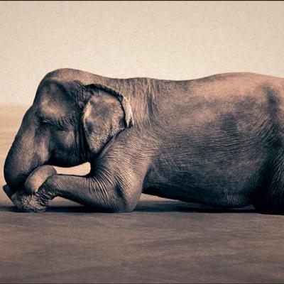 Маленька дівчинка та її друг слон на старих знімках (ФОТО)