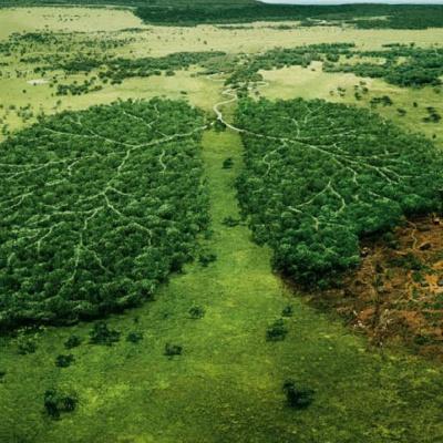 В Україні планують посилити відповідальність за адміністративні правопорушення проти довкілля