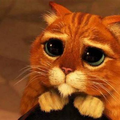 Кіт у чоботях існує насправді: мережу підкорив погляд кота, схожий на персонажа мультяшного Шрека
