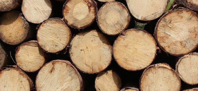 На Луганщині слідчі задокументували факти незаконного перевезення лісоматеріалів: відкрито кримінальні провадження