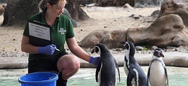 Добірка смішних фото про те, як ветеринари зважують різних тварин