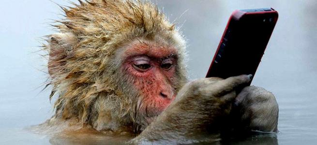 Господар зеленої мавпи показав, як його улюбленець приймає ванну