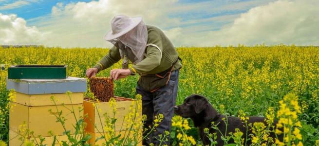Влада і бджолярі разом розвиватимуть «медовий» бізнес на Луганщині