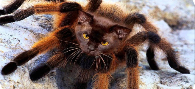 Кішка влаштувала епічний бій з величезним павуком (ВІДЕО)