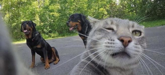 Селфі, що випадково зробив кіт підкорило соцмережі