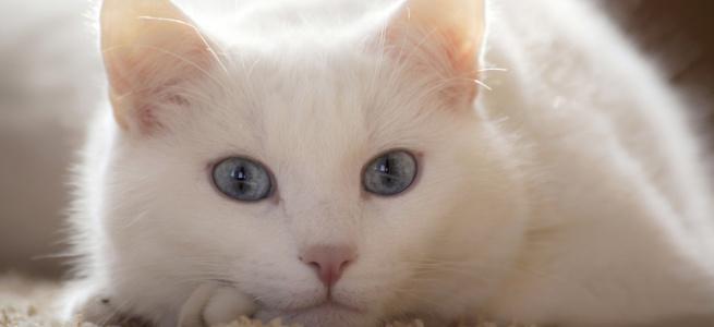 Мережу розсмішив кіт, який придумав хитрий спосіб, як знайти сім'ю (ФОТО)