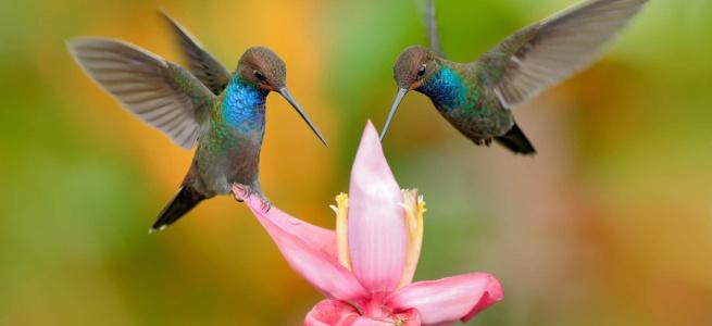 «Пернаті інтелектуали»: 5 найрозумніших птахів, на думку вчених