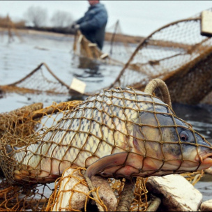 У травні рибоохоронними патрулями викрито понад 4,5 тис. порушень та вилучено 11 тонн браконьєрської риби