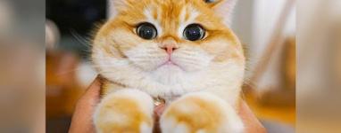 Милі кішки, які живуть в магазинах (ФОТО)