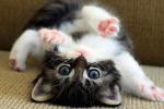 У мережі показали кота, який продемонстрував відмінні навички безконтактного бою