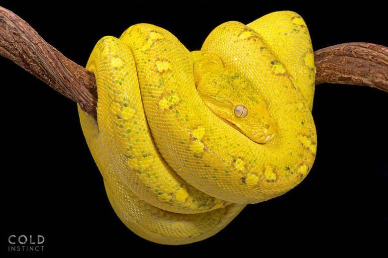 змея 14