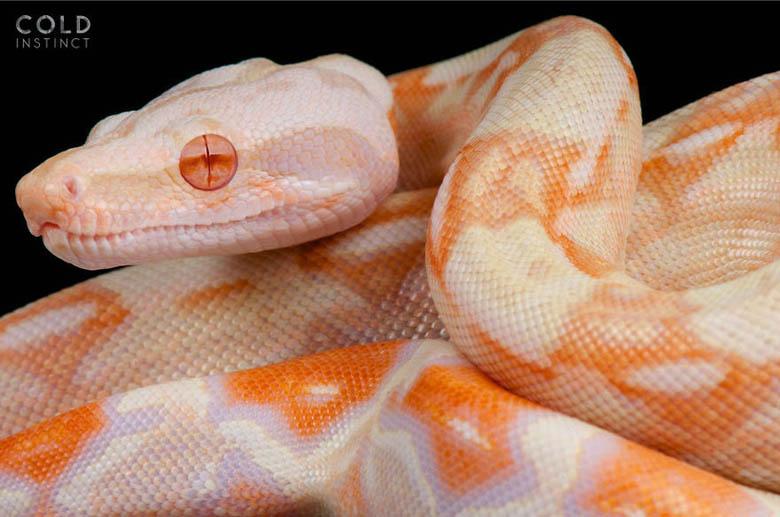 змея 16