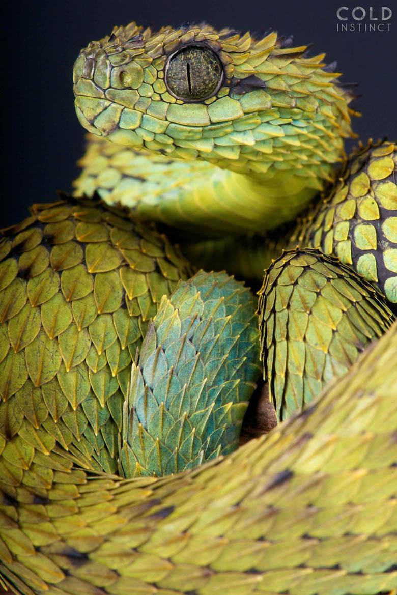 змея 2