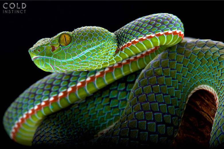 змея 8